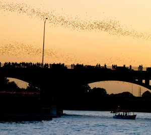 bats flying around congress avenue bridge in austin